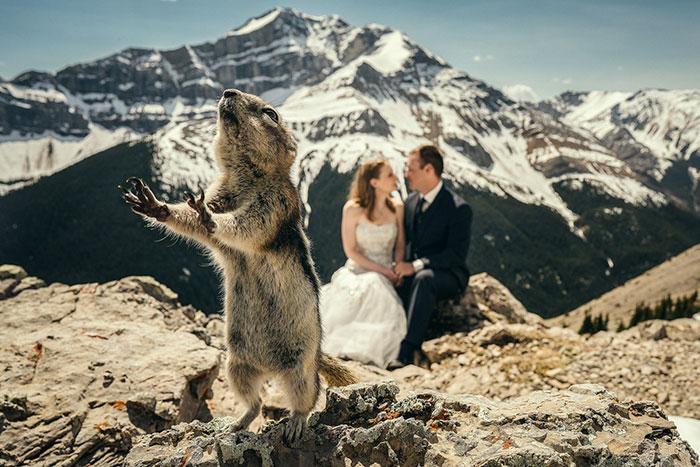 Как дети, животные и гости портят свадебные фотографии (17 фото)