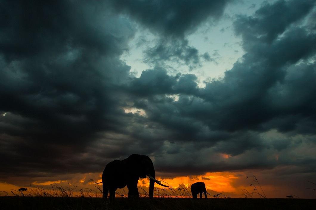 7. Слоны на закате. (Фото: Пол Гольдштейн / Rex)