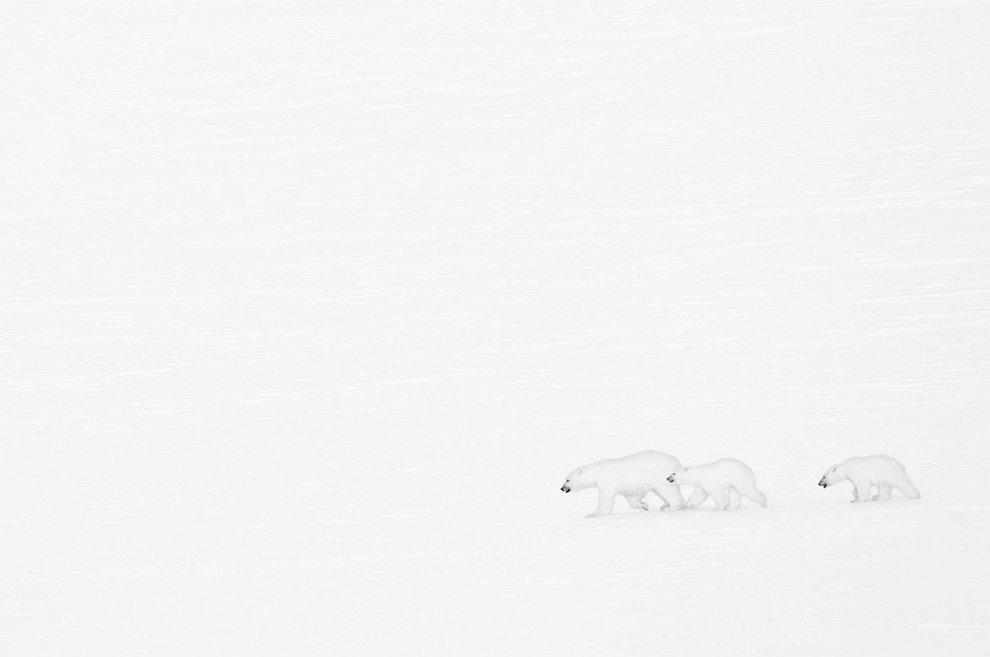 """Лучшие фотографы дикой природы: конкурс """"Золотая черепаха"""""""