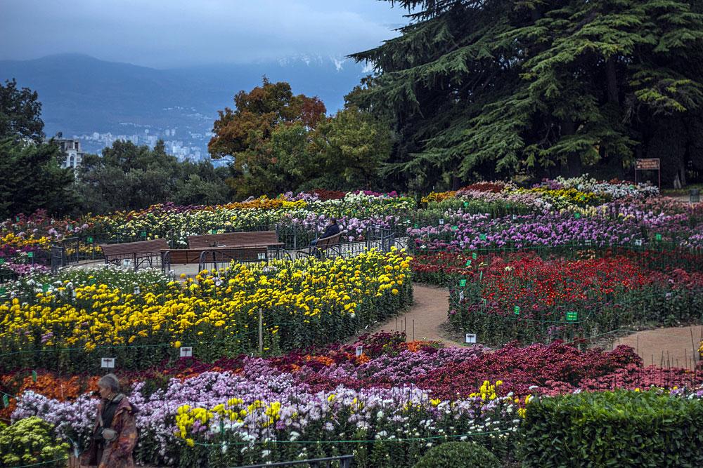 Ялта ботанический сад фото сейчас