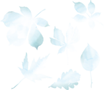 natali_14_fall_leaves.png