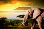 large_слон.jpg