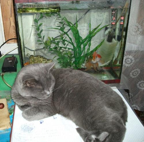 Бетси у аквариума