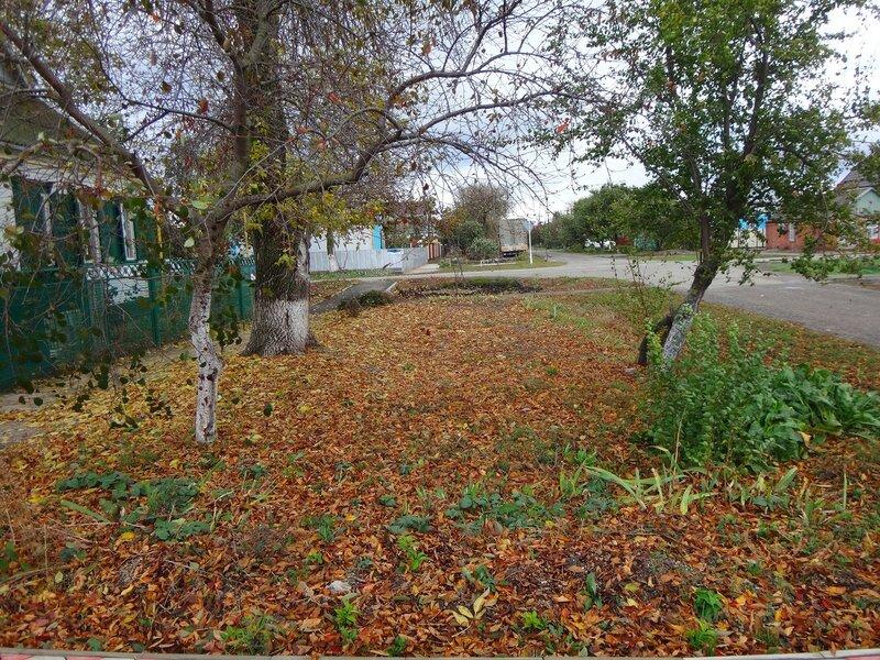 Ходит жёлтая Осень ... На финише октября, в городе у моря Азовского. (1).JPG