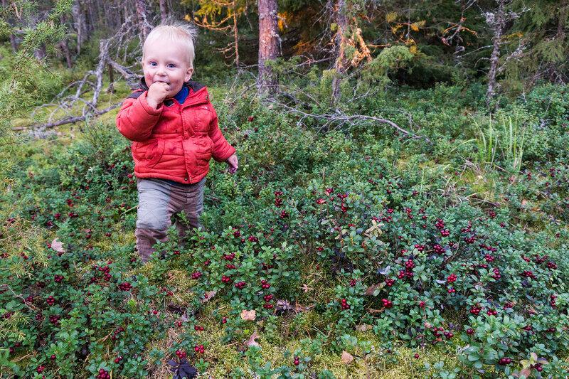 ребенок полтора года сам ест ягоды в лесу