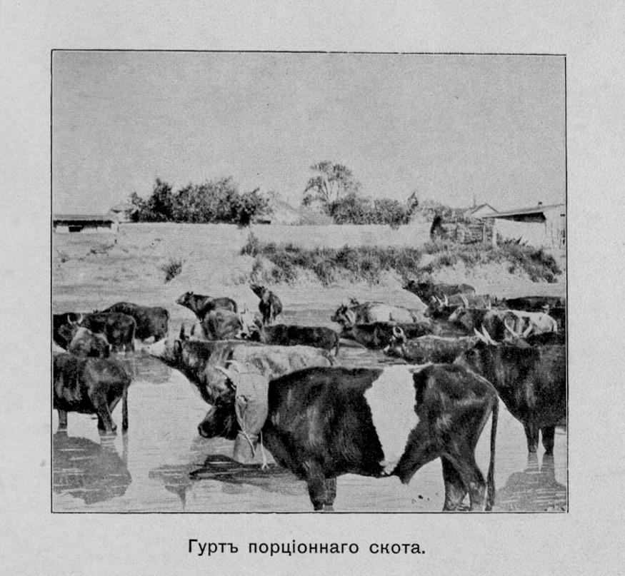 Альбом Русско-японская война 1904-1905. Часть 2