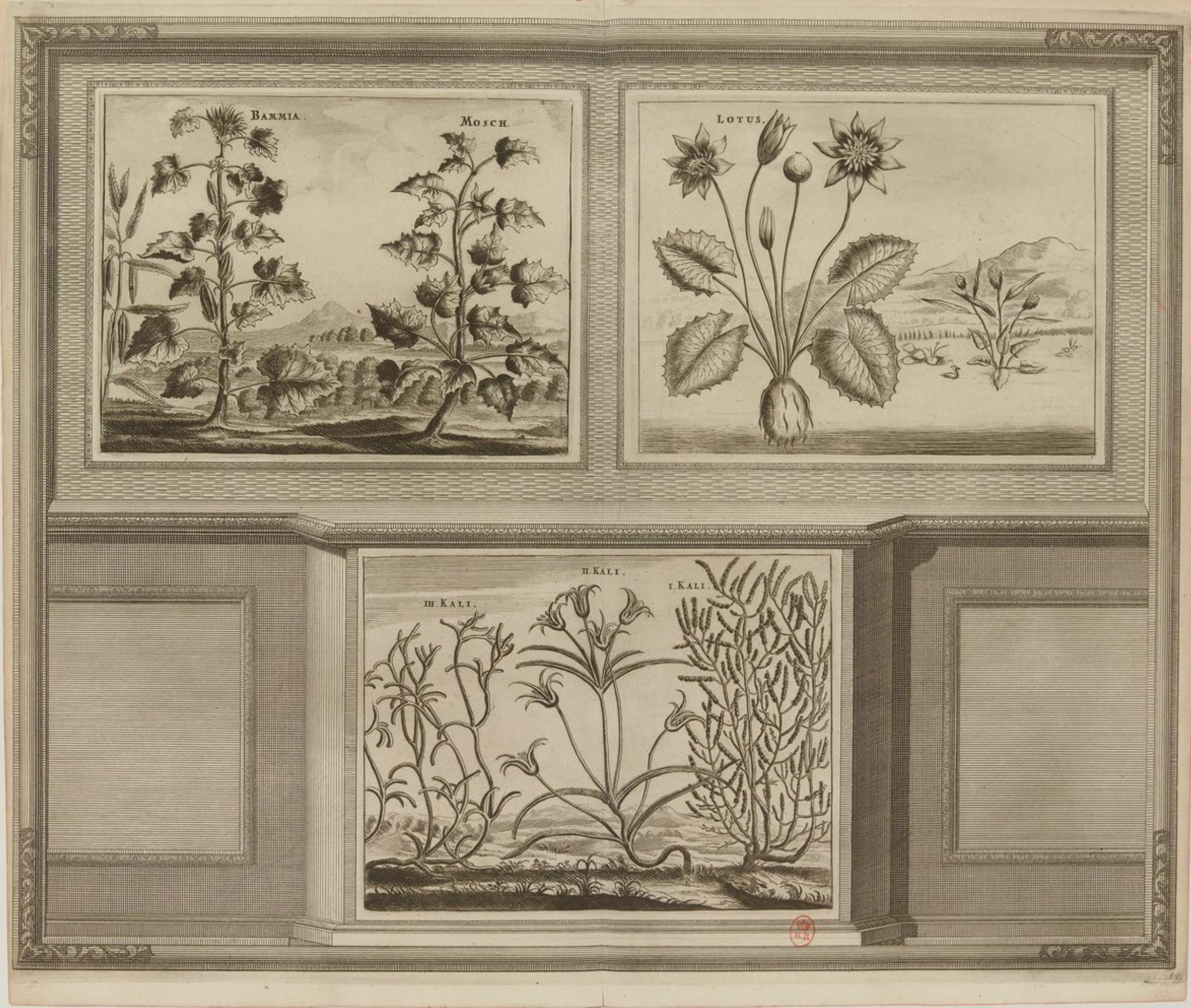 30. Лотос и другие растения
