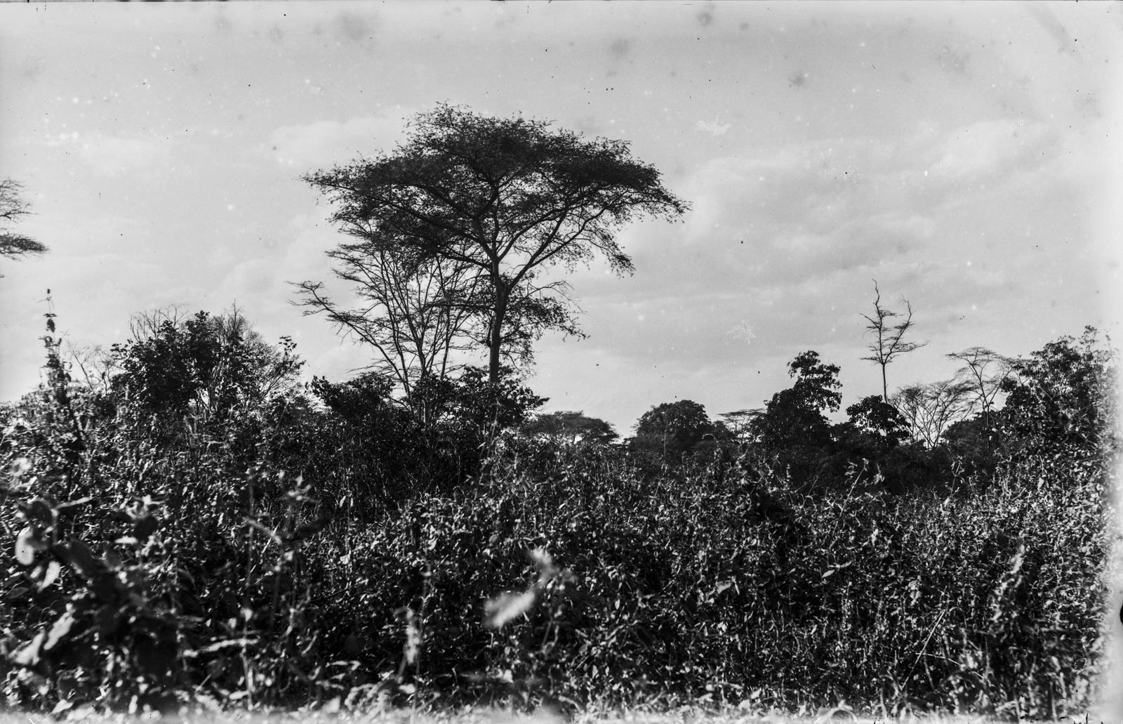 36. Растительность в районе Аруши
