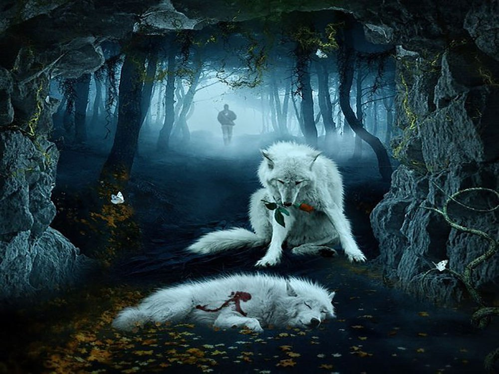 волки-7.jpg