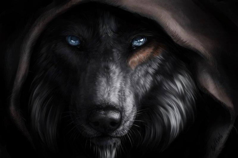 волки-1.jpg