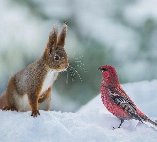 0 17cd34 5318fa75 L - Вся красота в зимних картинках от 26.12.2017