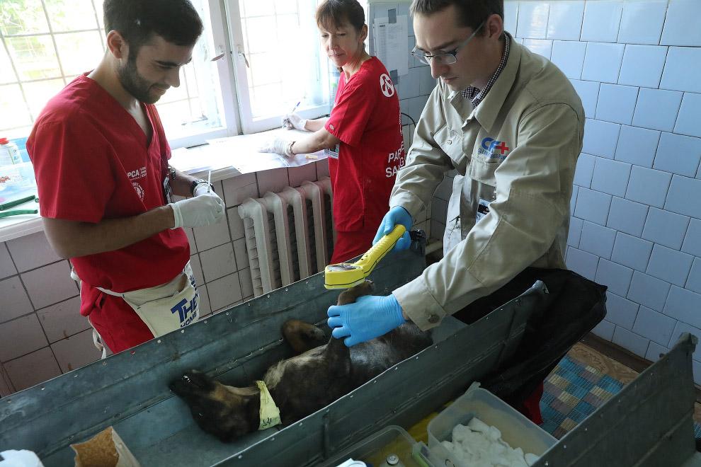 6. Этим пациентом занимается ветеринар из Сан-Диего, штат Калифорния. (Фото Sean Gallup):