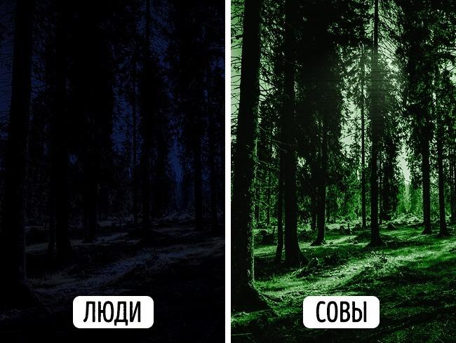 © pixabay     Вночное время суток совы могут видеть в3раза лучше, чем люди. Уних