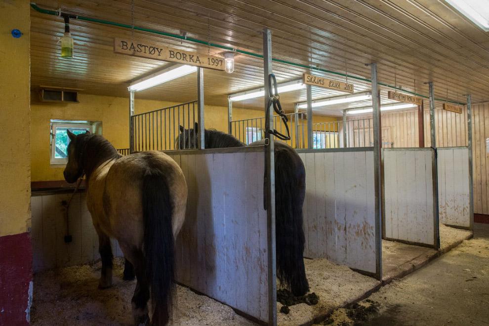 47. Овес для лошадок выращивают здесь же, рядом с конюшней.