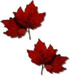 Autumn Gold #10 (99).png