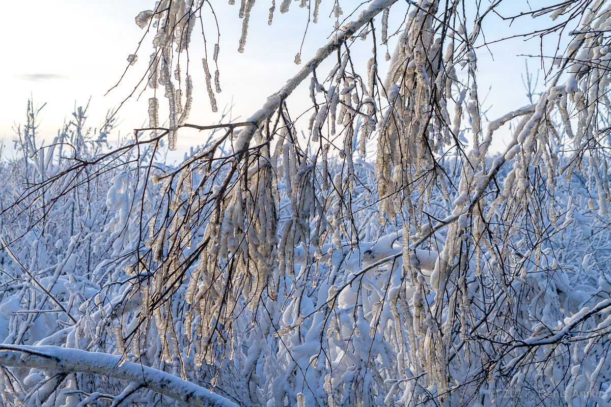 зима иней фото 2