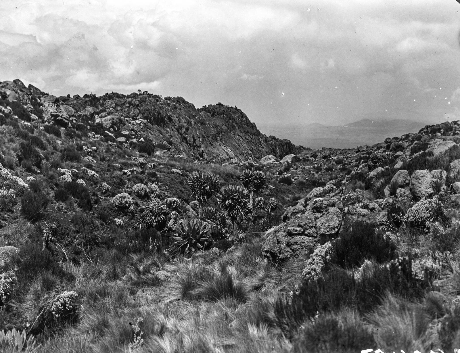162. Скалистый пейзаж с растительностью (включая Сенецио Джонстония) на высоте 3600 м