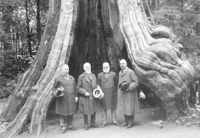 1900-е. С.С. Дуглас, Барон Страткона, сэр Макензи Боуэлл и C.C. Чипман перед «Пустотелым деревом» в Стэнли-парке