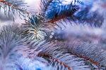 Рождество в Богородичном