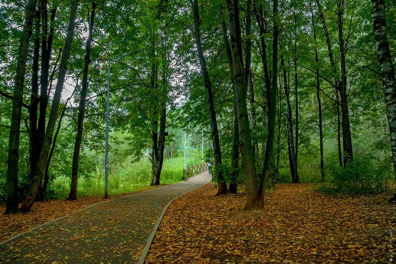 Осень в нашем лесу