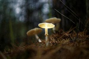 в лесной тени