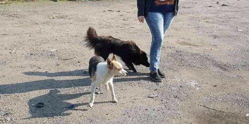 Томас Андерс и Дитер Болен собака из приюта догпорт