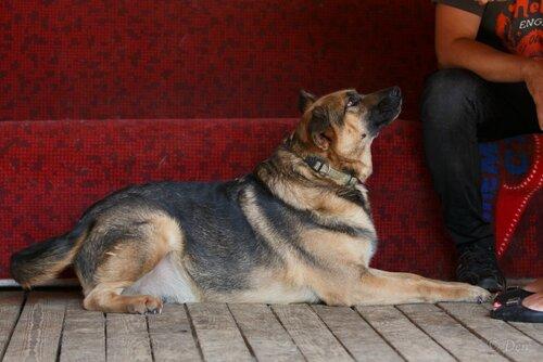 собака мухтар из приюта догпорт