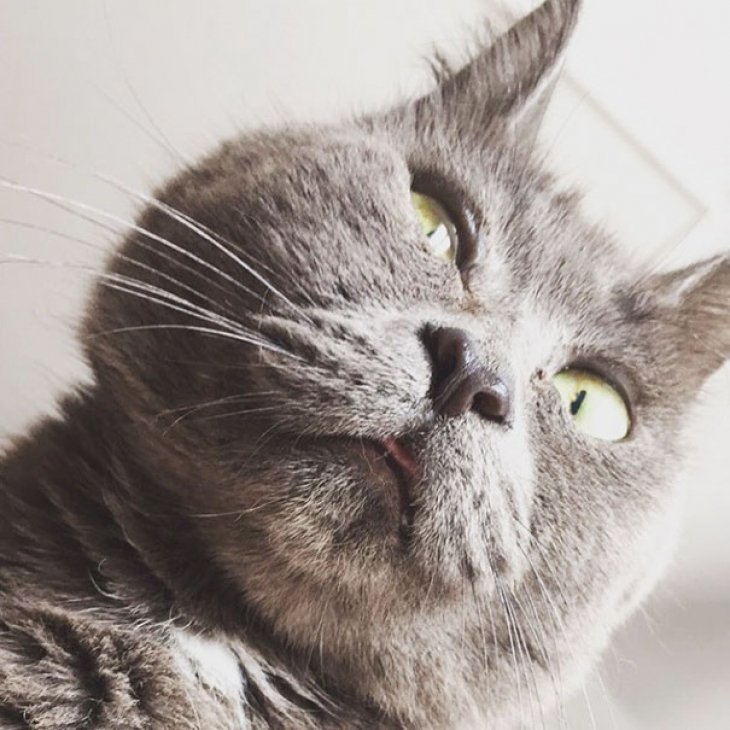 Что-то не так с Кевином: этот кот всегда выглядит удивленным