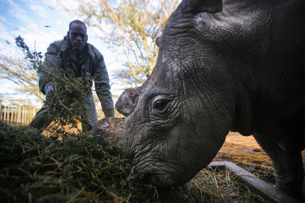 4. Браконьерство достигло больших масштабов в 1960 году. Так, рог носорога можно продать по цен