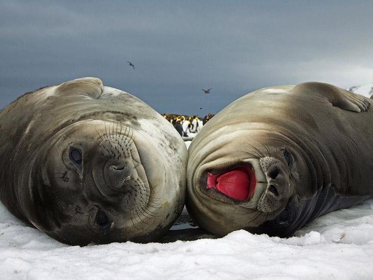 National Geographic: лучшие фотографии октября (22 фото)
