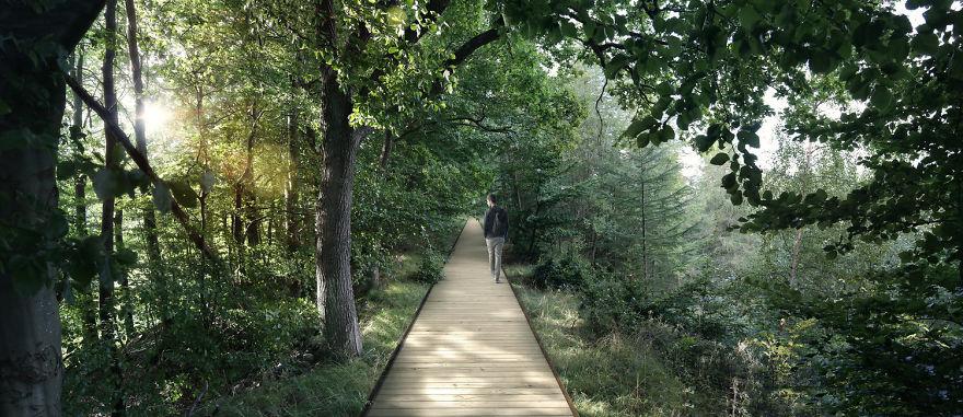 Весь маршрут будет поделен на две секции: прогулка среди старейших деревьев леса на высоте и вариант