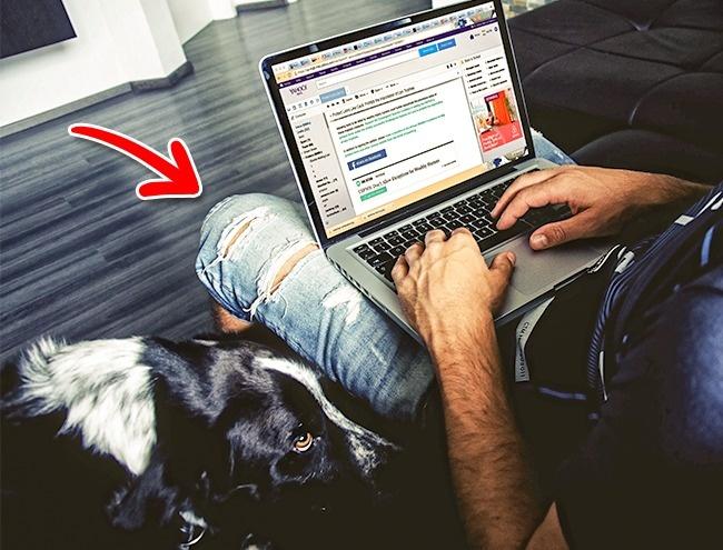 © Pexels     Хотя название ноутбука происходит отслова «колени» (англ. lap— колени, lap