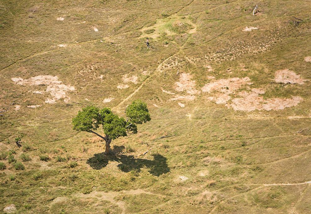 10. Очень много мёртвых деревьев.