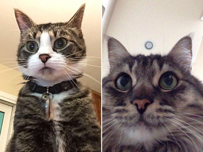 Коты пытаются разблокировать ноутбуки