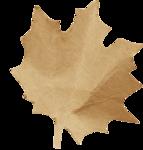 natali_14_fall_leaf12.png