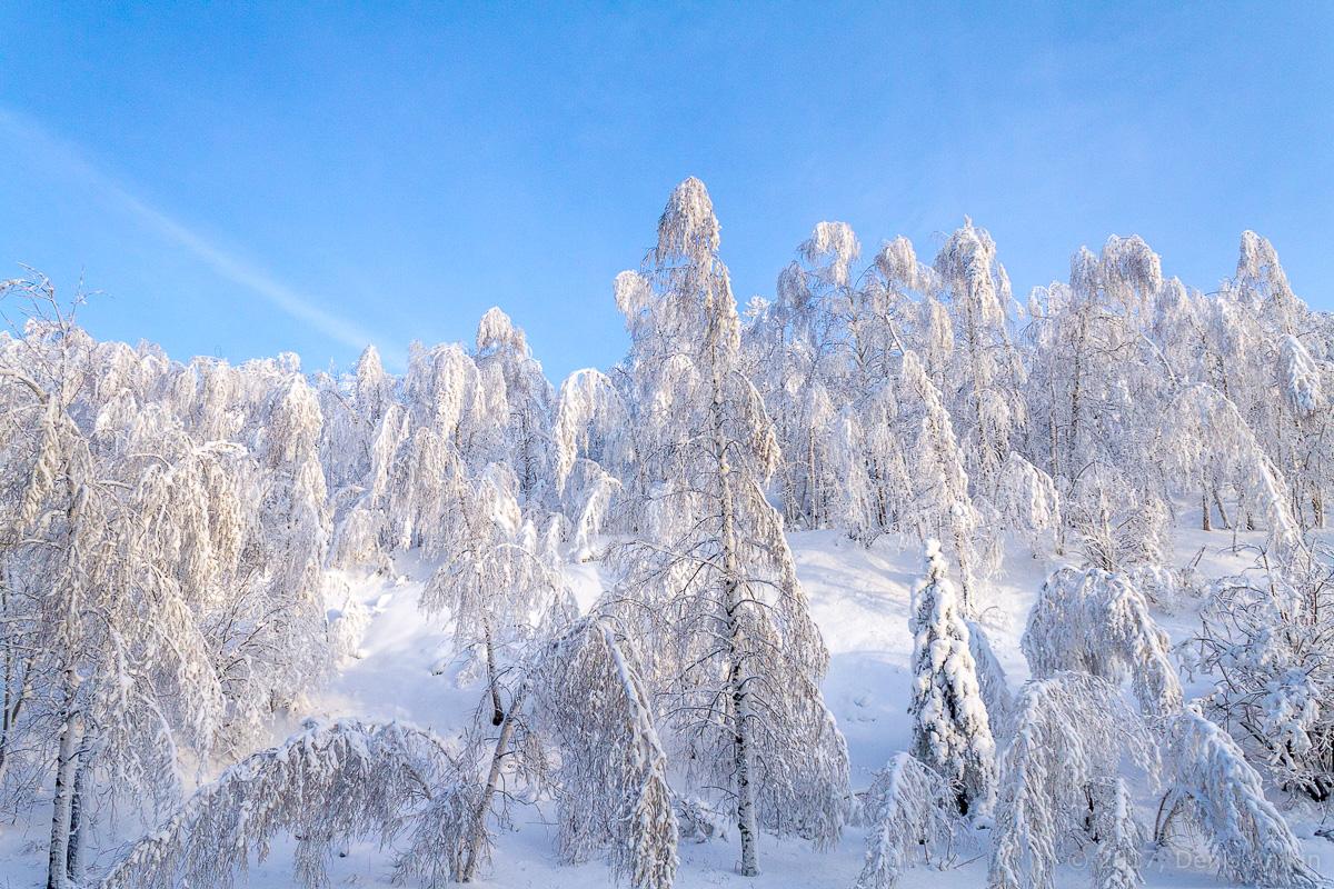 снег лес фото 3