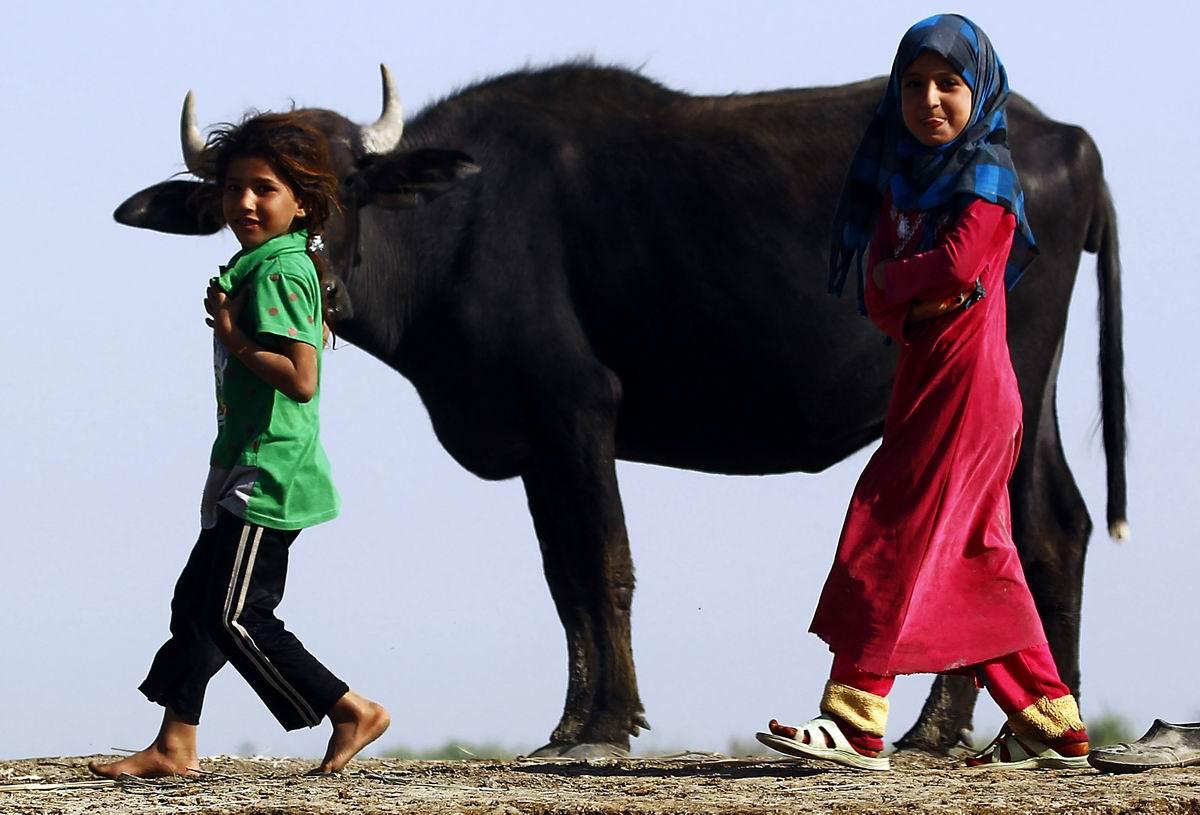 Променад с коровкой: Озорные иракские девчонки