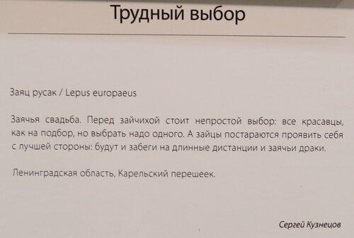 https://img-fotki.yandex.ru/get/369167/140132613.6ca/0_24430f_111946db_L.jpg
