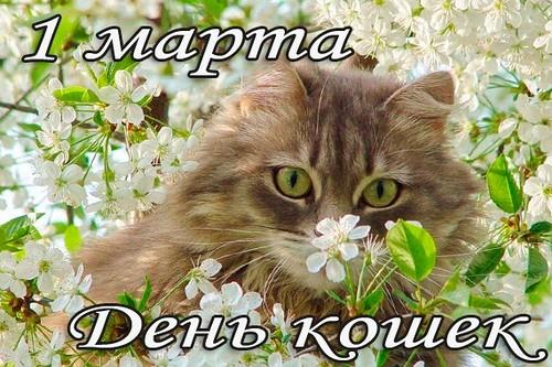 Картинка 1 марта. День кошек!