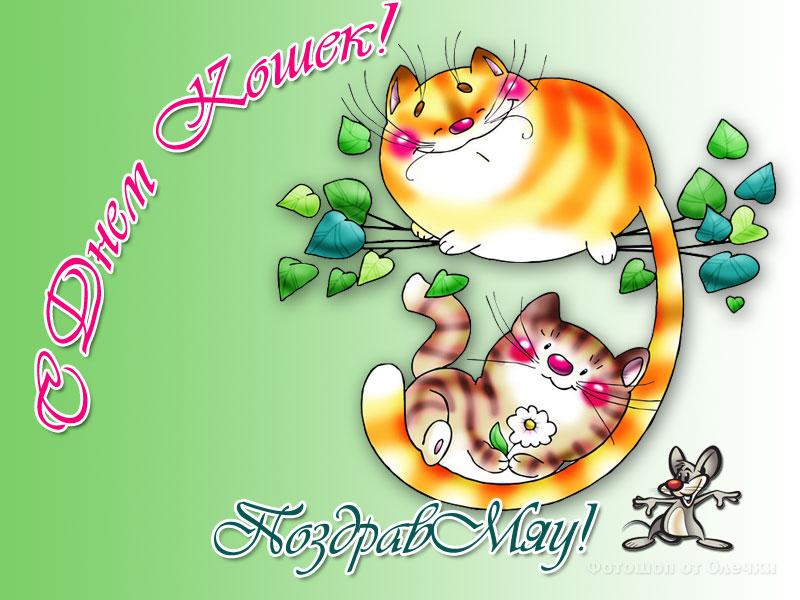 Поздравлениями, с днем кошек открытки гифы прикольные