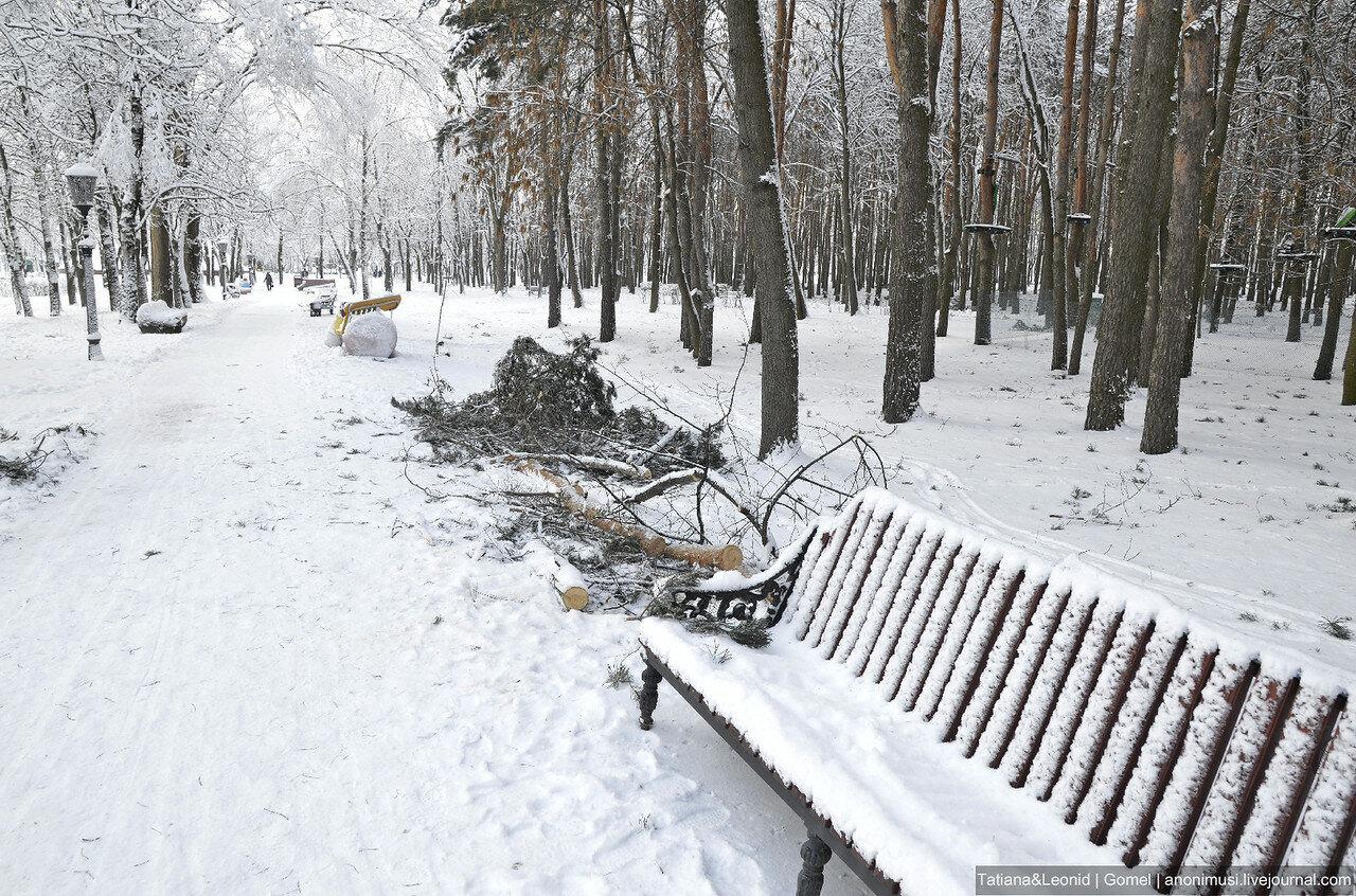 Сквер Фестивальный зимой. Гомель