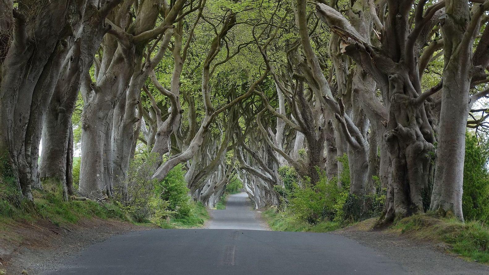 Еще одна локация из Северной Ирландии, один из самых фотографируемых местных природных феноменов — Т