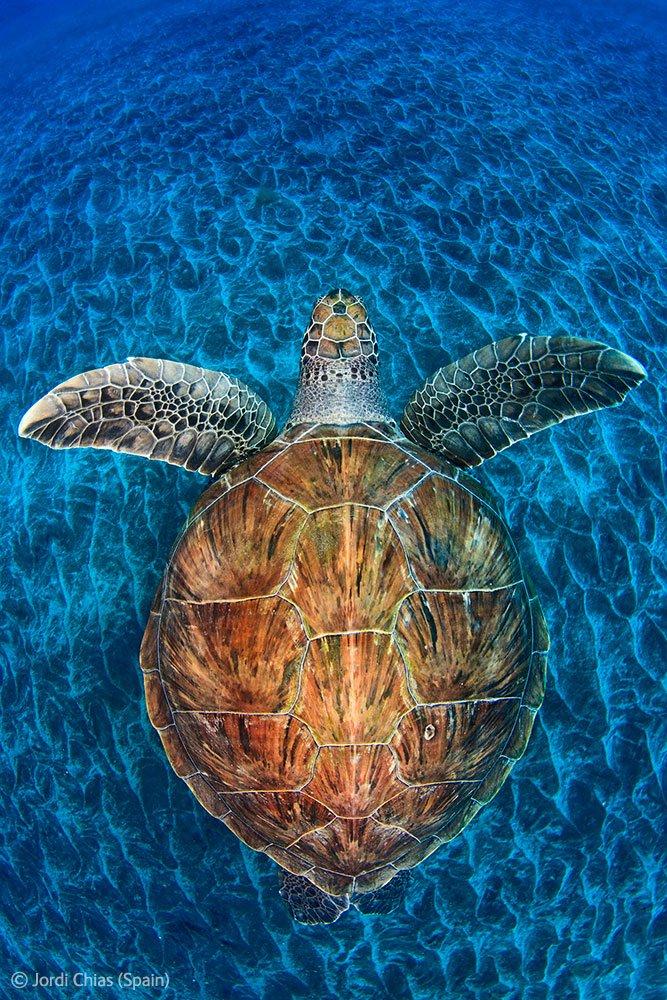 Скат на острове Большой Кайман. (Фото Claudio Gazzaroli, Швейцария):