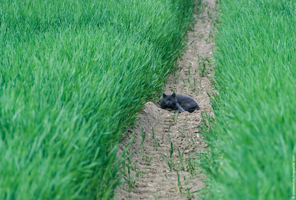 Или же зайца, который тут же показал мне свой хвост, стоило лишь подойти поближе: