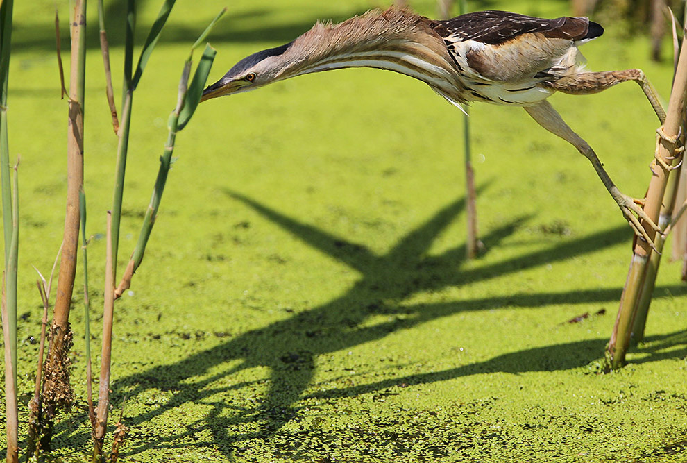 познавательно самый большой пары пар паром Мали пара птицы