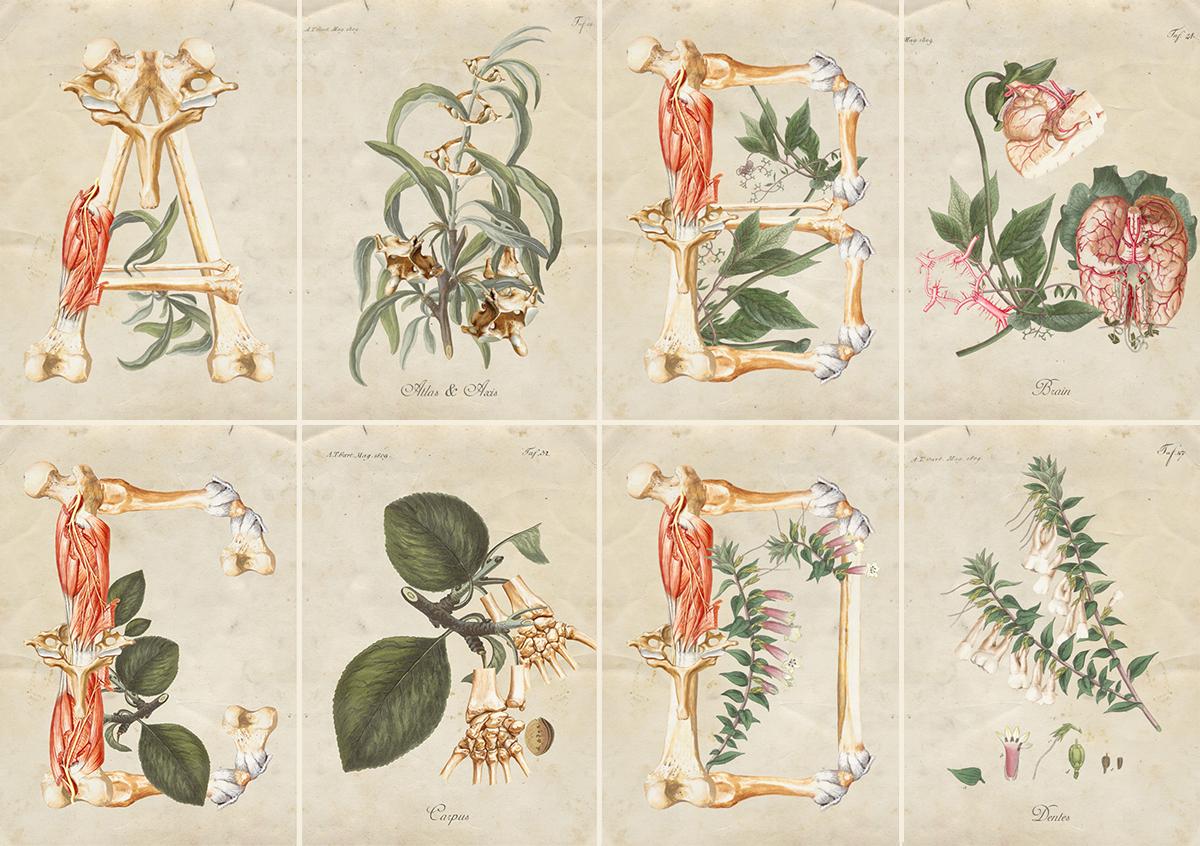 Floral + Anatomy