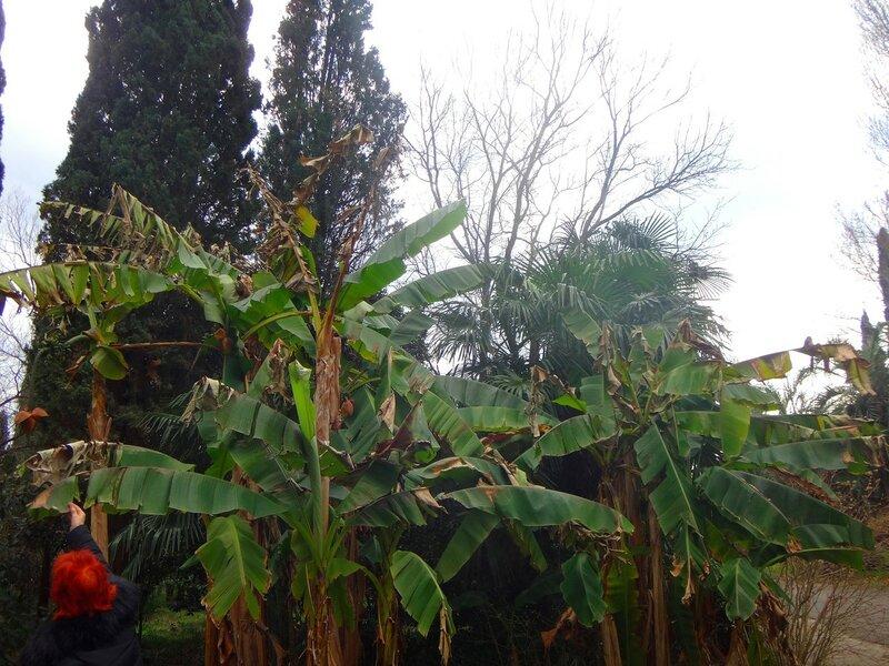 Зимнее утро в Гаграх...  (27).JPG