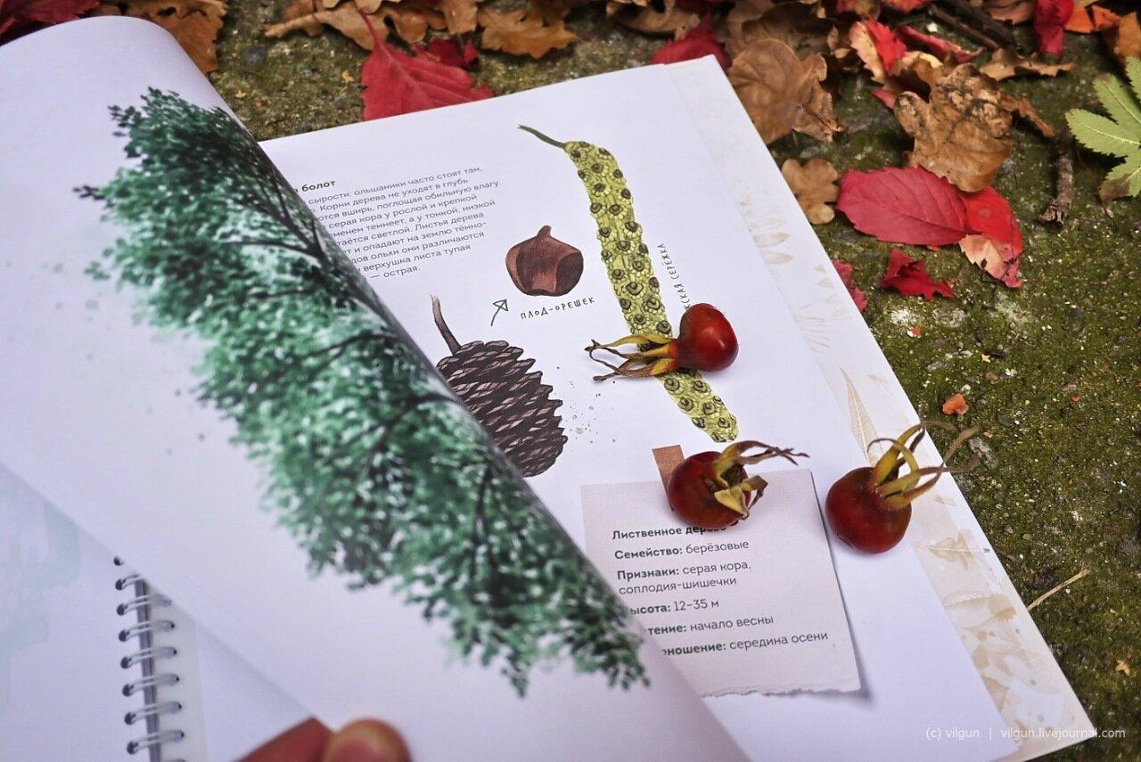 Деревья кировской области фото и названия с листьями гербарий