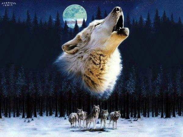 волки-11.jpg
