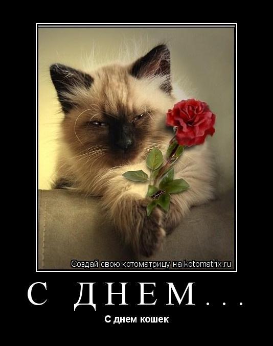 Картинка С днем Кошек! Киса с цветком